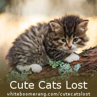 Cute Cats Lost - UK