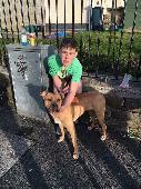 Found Brown Dog on 21 Apr. 2016 @ merthyr