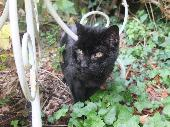 Found Black Cat on 01 Sep. 2016 @ TRINITY SQUARE BROADSTAIRS