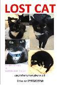 Lost Black & White Cat on 09 Sep. 2016 @ Ox11 9aj