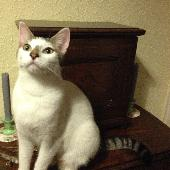 Lost White & Brown Cat on 26 Nov. 2016 @ Ethelred Road, Westgate-on-Sea