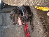 Found Dog on 30 Dec. 2017 @ Lower house lane widnes