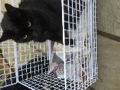 Found Cat on 31 Dec. 2017 @ Shirley Solihull