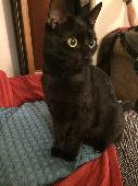 Lost Cat on 07 Feb. 2018 @ Richards terrace adamsdown cardiff cf241rw