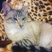 Lost Cat on 12 Jan. 2018 @ Pier plain, gorleston NR31 6ps