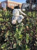 Found Cuddly bunny on 16 Feb. 2018 @ Robinson Way, Portsmouth