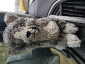 Found Cuddly kitty on 18 Feb. 2018 @ Riverside leisure park Winchester hampshire