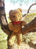 Found Teddy bear on 23 Apr. 2018 @ Verrado Way and I-10, Buckeye, AZ