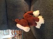 Found Cuddly toy on 23 Apr. 2018 @ Prescott drive chesterland oh