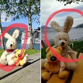 Lost Cuddly toy on 20 May. 2018 @ Aksla, 6007 Ålesund, Norway