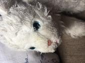 Found Cuddly toy on 26 May. 2018 @ Cardiff- South Wales uk