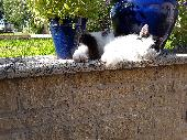 Found Cat on 16 Jun. 2018 @ Southwick, Wilts.