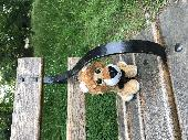 Found Toys & Games on 10 Jun. 2018 @ Walpole park, Ealing, London