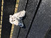 Found Cuddly toy on 02 Jul. 2018 @ Play Park, Abshot Road, Titchfield Common