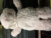 Found Teddy bear on 01 Jul. 2018 @ Toronto Airport Terminal 3