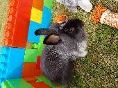 Lost Rabbit on 06 Jul. 2018 @ Sutton in ASHFIELD