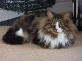 Lost Cat on 21 Jun. 2018 @ Woodville Road Woodford Bude EX23