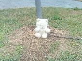 Found Teddy bear on 15 Jul. 2018 @ Troon, south beach