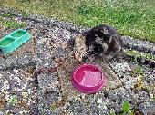 Found Cat on 15 Jul. 2018 @ back garden RM 10 area, Dagenman, Wood lane area