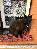 Lost Cat on 18 Jul. 2018 @ Erdington