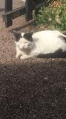 Found Cat on 30 May. 2018 @ oronsay grove salford 5