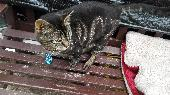 Found Cat on 19 Jun. 2018 @ Mapperley, Nottingham, NG3