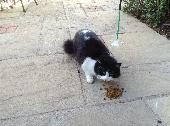 Found Cat on 08 Aug. 2018 @ Collingham, Wetherby, West Yorkshire