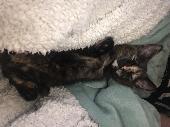 Lost Cat on 31 Aug. 2018 @ Newtown,Trowbridge, Wiltshire