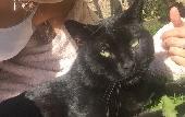 Lost Cat on 31 Aug. 2018 @ Eh16 6qn Liberton edinburgh