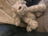Found Teddy doggy on 09 Sep. 2018 @ A69, Near Haydon Bridge