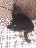 Lost Cat on 22 Aug. 2018 @ Garden Gregory Rd Marks Gate Chadwell Heath Romford
