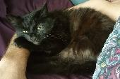 Lost Cat on 09 Sep. 2018 @ Mainstone Avenue, Cattedown, Plymouth, PL4 9NA