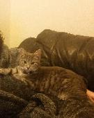 Lost Cat on 27 Sep. 2018 @ ballykelly, limavady, county londonderry