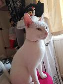 Lost Cat on 07 Sep. 2018 @ Withington, Manchester, M14