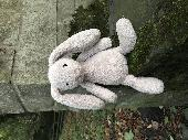 Found Jellycat bunny on 18 Oct. 2018 @ Thornton-le-Dale