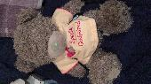 Found Teddy bear on 08 Nov. 2018 @ Amesbury Avenue STreatham