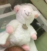 Lost Cuddly toy on 12 Jan. 2019 @ kirkcaldy retail park