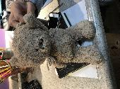 Found Teddy bear on 15 Jan. 2019 @ Scottsdale, ARIZONA Cactus Park