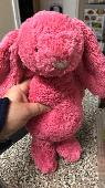 Found Jellycat bunny on 22 Jan. 2019 @ Arbor Trails Austin Texas
