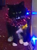 Lost Cat on 18 Jan. 2019 @ Market place southnormanton DERBYSHIRE de55 2bn