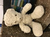 Found Teddy bear on 18 Feb. 2019 @ Union Station Washington, DC