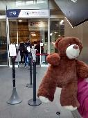 Found Teddy bear on 21 Feb. 2019 @ LNER train East coast Edinburgh to King's X coach C