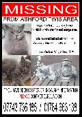 Lost Cat on 16 Jan. 2019 @ Orchard Way Ashford middx