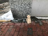 Found Teddy bear on 23 Feb. 2019 @ Commercial Street, Portland, Maine 04102