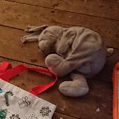 Lost Cuddly bunny on 15 Mar. 2019 @ Kingstanding road B44 9TG