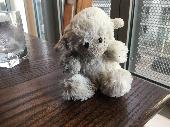 Found Cuddly toy on 23 Mar. 2019 @ Sandpiper Road, Edinburgh, EH6 4TR, UK