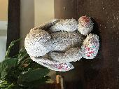 Found Jellycat bunny on 22 Apr. 2019 @ Dublin Zoo, Phoenix Park, Dublin