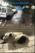 Found Teddy doggy on 09 May. 2019 @ Gibbon Road, Kingston upon Thames