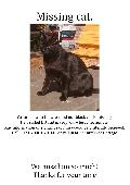 Lost Cat on 28 Apr. 2019 @ Hereford