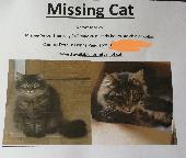 Lost Cat on 23 May. 2019 @ Aspen Close, Tuxford, ng22